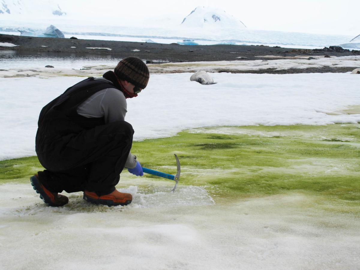 Climate change turns Antarctica's snow green